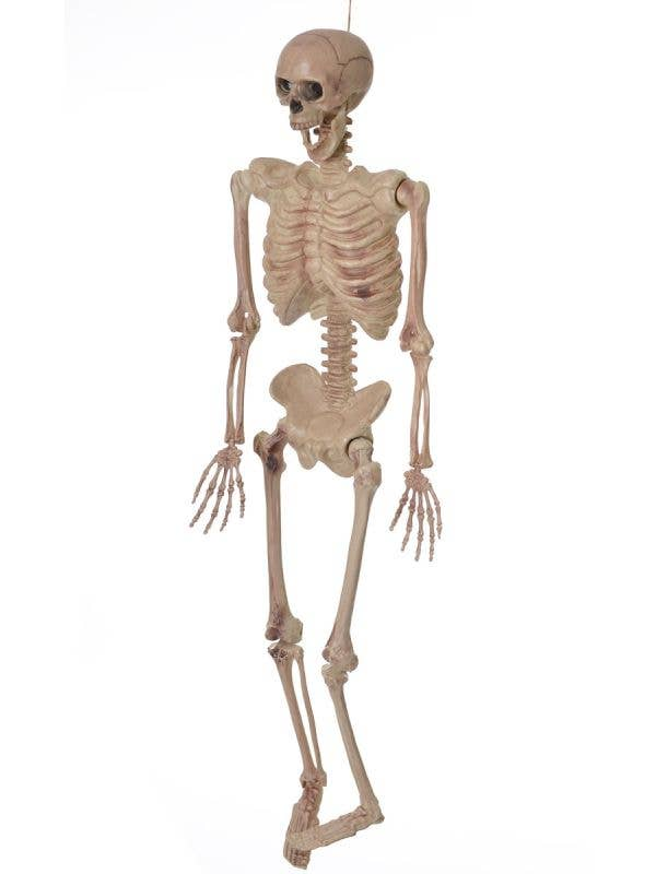 Hanging and Pose-able Life Size Skeleton Halloween Prop Main Image